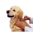 Páskom Állatorvosi Rendelő