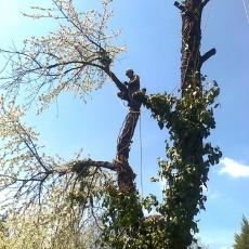 Murai László - veszélyes fák kivágása - http://favagas.net