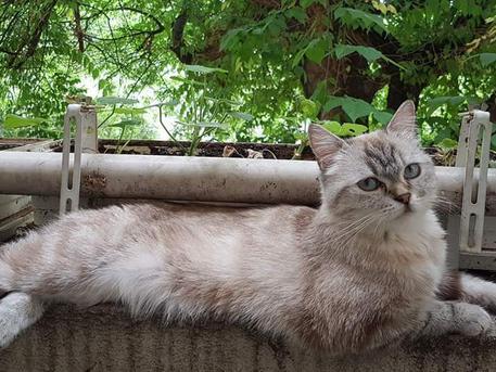 Eltűnt cica káposztásmegyeren